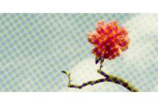 flower320