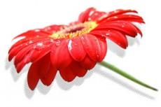 flower322