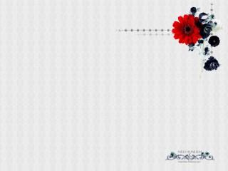 赤いガーベラのデスクトップ壁紙