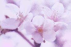 flower323