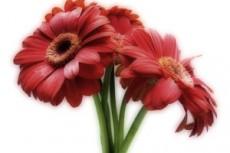 flower325