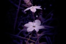 flower332