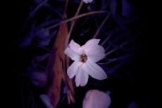 flower333