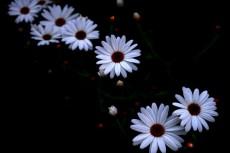 flower334