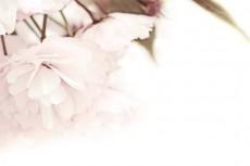 flower339