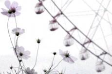 flower349