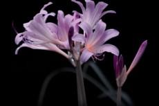 flower351
