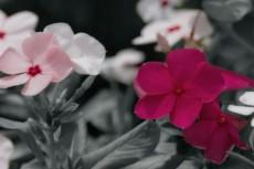 flower353