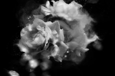 norepeat-flower063_9