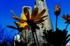 flower355