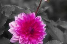 flower358