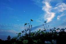 flower361