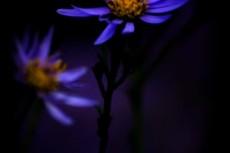 flower362