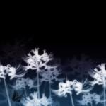 白い彼岸花と蝶(6パターン)