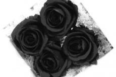 flower041_2