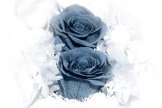 flower043_2