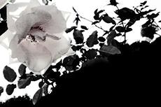 flower162_2