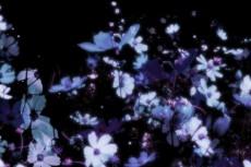 flower174_2
