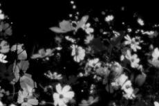 flower174_3