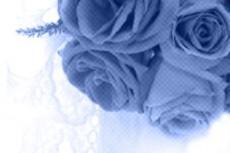 flower248_2