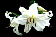 flower368