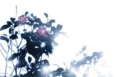 flower277_4