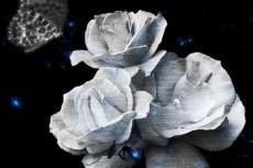 薔薇と蝶の写真素材