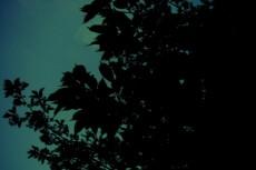 葉のシルエットの写真素材