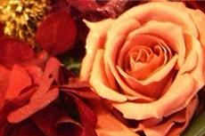 赤い薔薇のオーナメントの写真素材