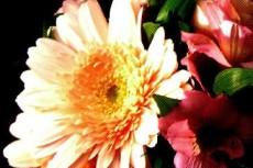 ガーベラの花束の写真素材