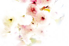 桜の写真素材