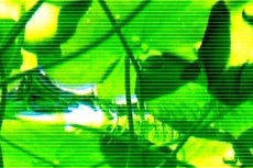 水草の写真素材