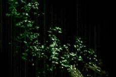 樹木の写真素材