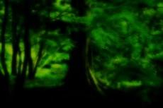 鎮座する大木