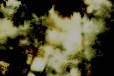 森の写真素材(2パターン)