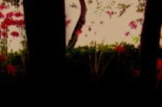 木のシルエットと赤い彼岸花
