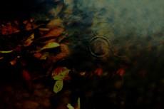 水溜まりの中の落ち葉の写真素材