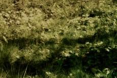 木の陰の写真素材