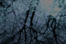水溜りに映る木々の写真素材