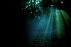 光が射し込む森
