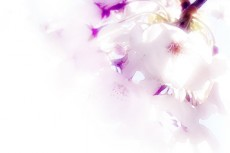 光あふれる桜