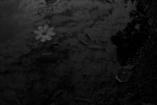 水溜りと花の写真素材