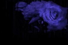 石化したような薔薇(2パターン)