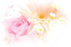ふんわりした雰囲気の薔薇とガーベラ