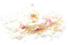 花と花弁の写真素材
