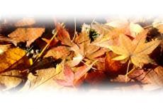 落ち葉の写真素材