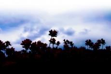 躑躅(ツツジ)の写真素材