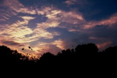 コスモスと薄明の空
