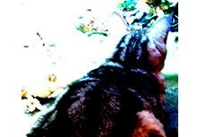 猫の後姿の写真素材