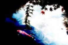 赤い鯉が泳ぐ池